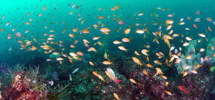 「山の海」の魚影が凄かった!!