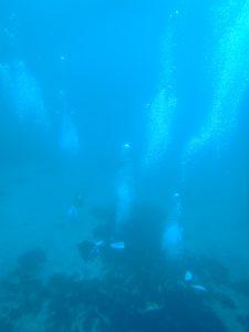 のりちゃん 水中風景